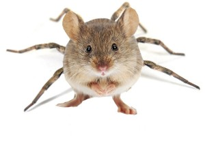 mouse-spider